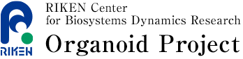 RIKEN Center for Biosystems Dynamics Research Organoid Project